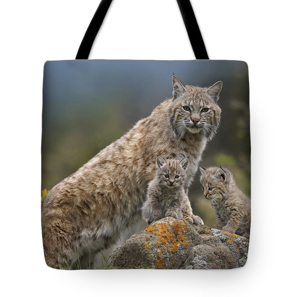 Bobcat Mother And Kittens North America Tote Bag by Tim Fitzharris