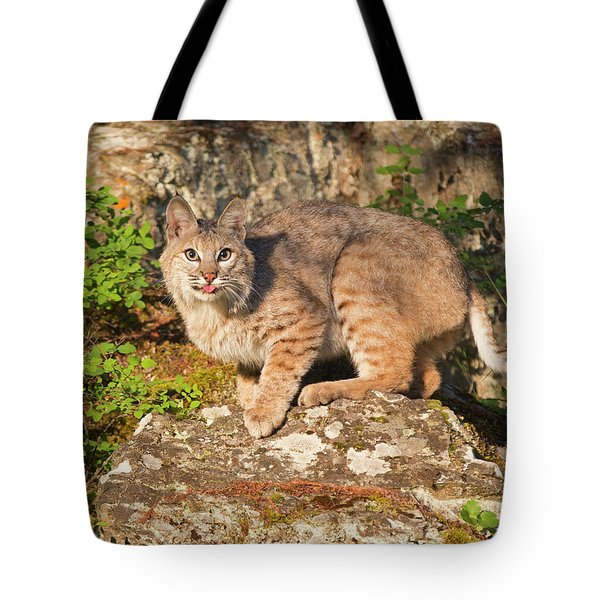 Bobcat On Rock With Tongue Out Tote Bag