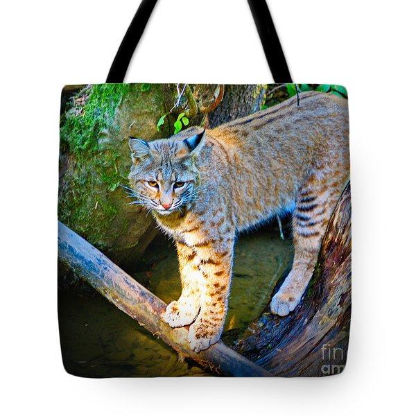 Bobcat Scanning The Water Tote Bag