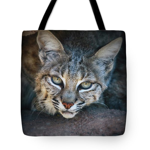 Bobcat Stare Tote Bag by Elaine Malott