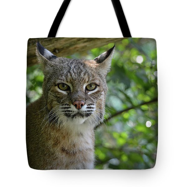 Bobcat Staring Contest Tote Bag