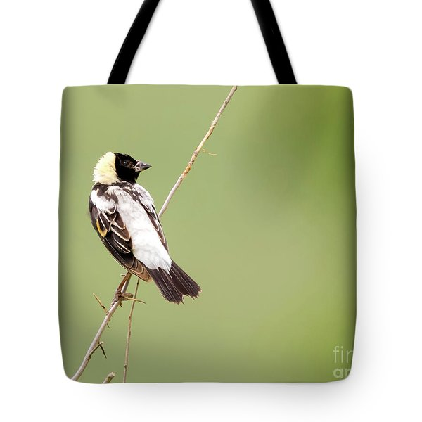Tote Bag featuring the photograph Bobolink Looking At You by Ricky L Jones