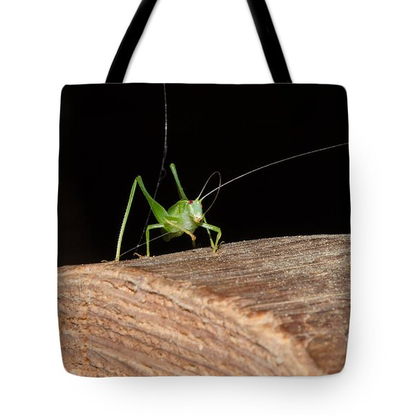 Boggy Whipped Antenna Tote Bag by Donna Brown