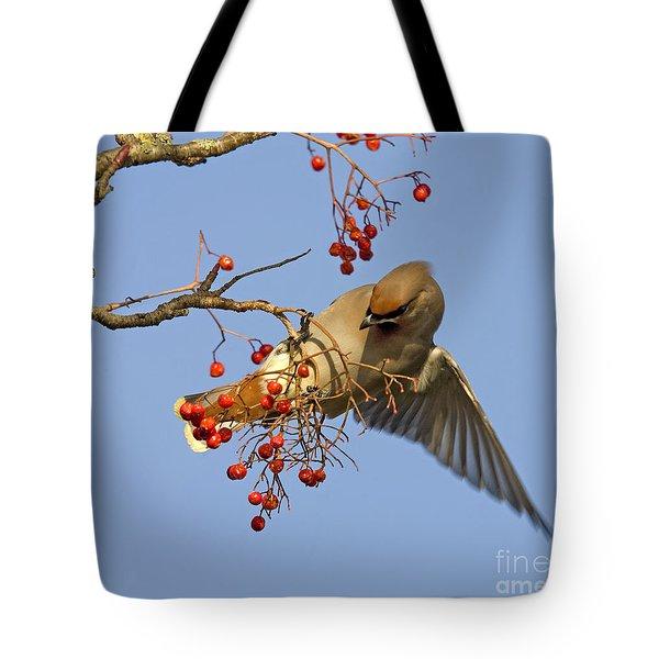 Bohemian Waxwing Tote Bag by Liz Leyden