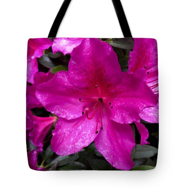 Bold Pink Flower Tote Bag