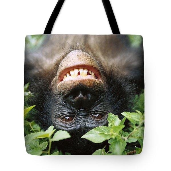 Bonobo Pan Paniscus Smiling Tote Bag