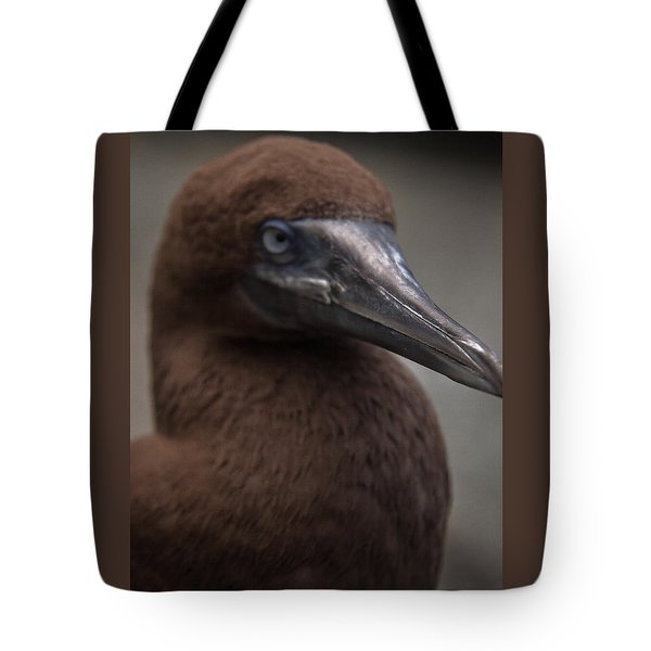Booby Tote Bag