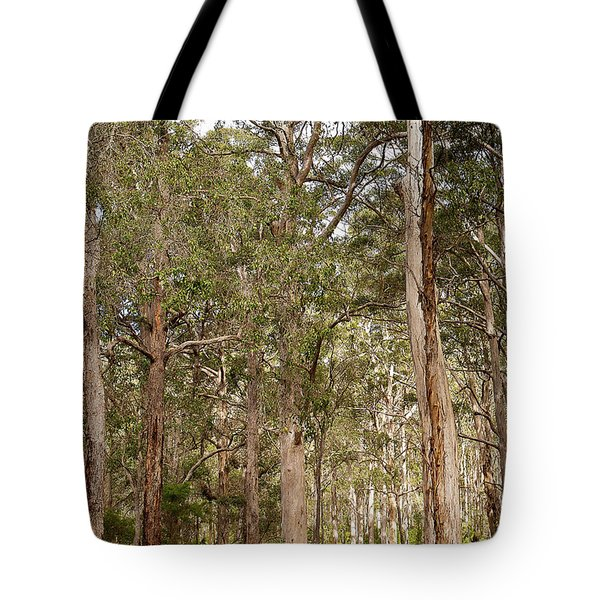 Tote Bag featuring the photograph Boranup Drive Karri Trees by Ivy Ho
