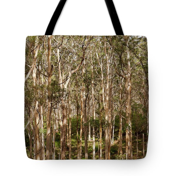 Tote Bag featuring the photograph Boranup Forest  by Ivy Ho