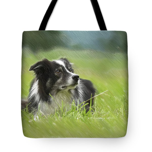 Border Collie - Dwp2189332 Tote Bag
