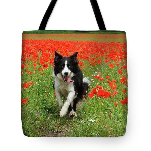 Border Collie In Poppy Field Tote Bag