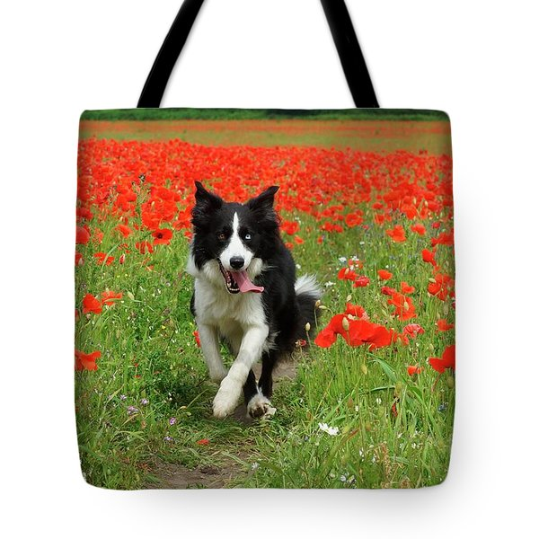 Tote Bag featuring the photograph Border Collie In Poppy Field by David Birchall
