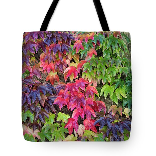 Tote Bag featuring the photograph Boston Ivy In The Fall by Tim Gainey