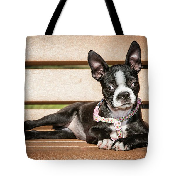 Boston Terrier Puppy Relaxing Tote Bag by Stephanie Hayes