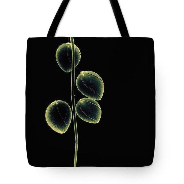 Botanical Study 2 Tote Bag by Brian Drake - Printscapes