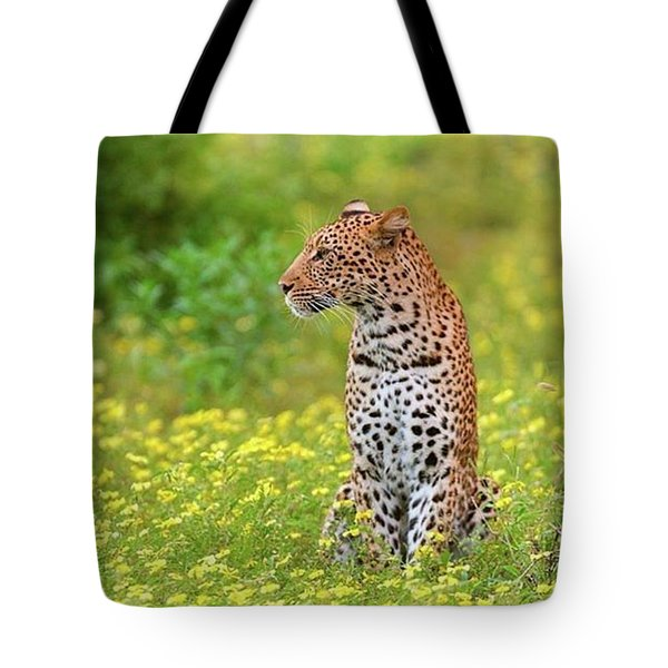 Botswana Leopard  Tote Bag by Happy Home Artistry
