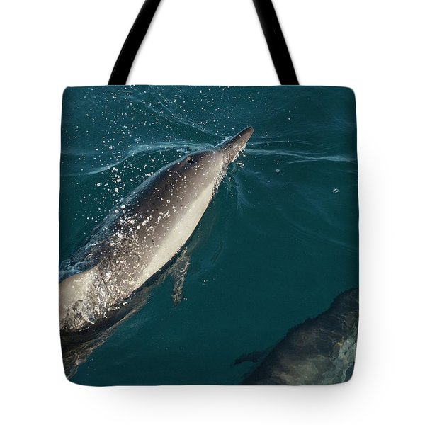 Bottle Nose Dolphin Tote Bag