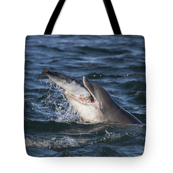 Bottlenose Dolphin Eating A Salmon - Scotland #5 Tote Bag