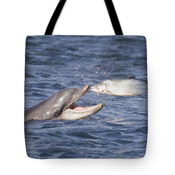 Bottlenose Dolphin Eating Salmon - Scotland  #36 Tote Bag