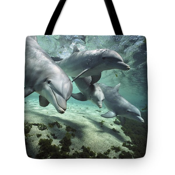 Tote Bag featuring the photograph Four Bottlenose Dolphins Hawaii by Flip Nicklin