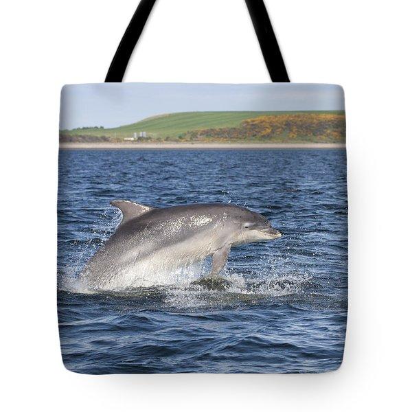 Bottlenose Dolphin - Scotland  #32 Tote Bag