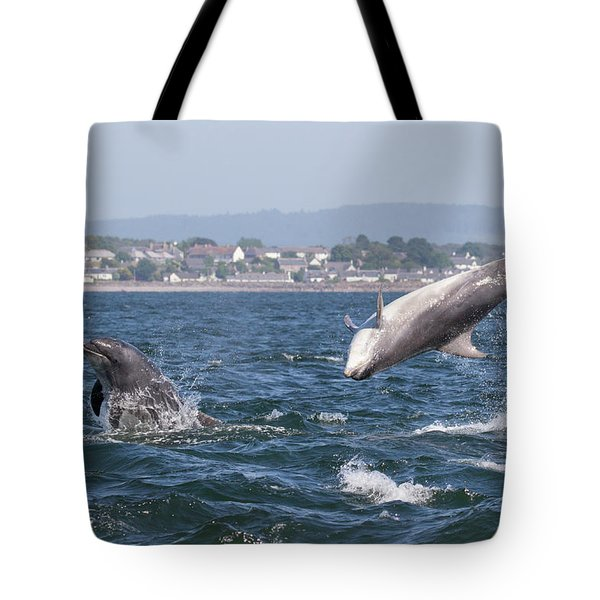Tote Bag featuring the photograph Bottlenose Dolphins - Moray Firth Scotland #45 by Karen Van Der Zijden