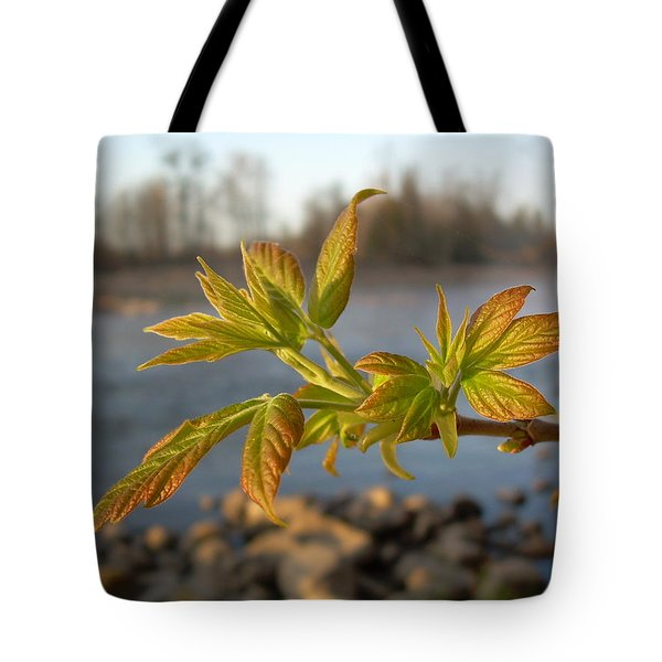 Tote Bag featuring the photograph Box Elder Leaves In Dawn Light by Kent Lorentzen