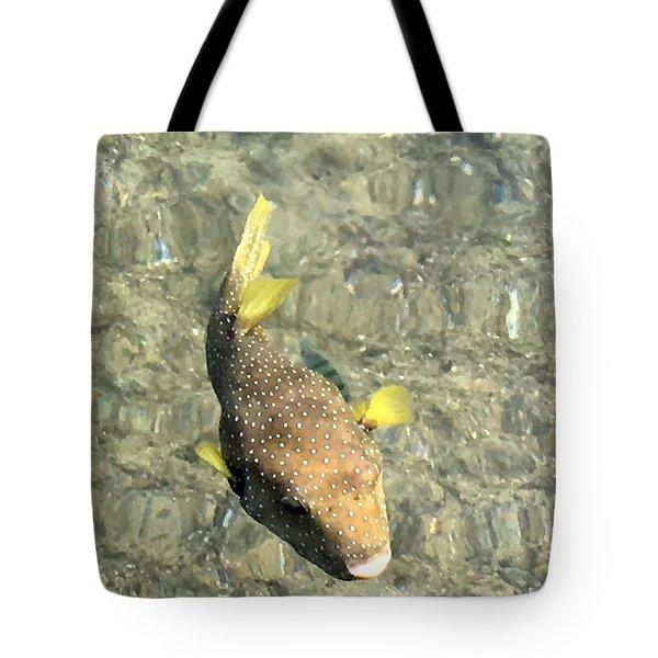 Box Fish - 2 Tote Bag by Karen Nicholson