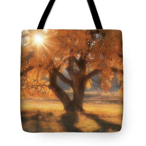 Boxelder's Autumn Tree Tote Bag