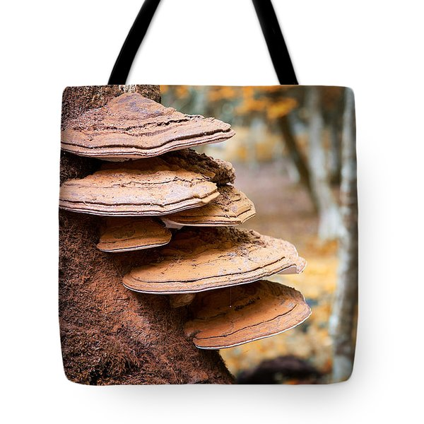 Bracket Fungus On Beech Tree Tote Bag