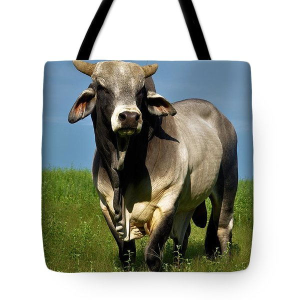 Tote Bag featuring the photograph Brahman Boss by Jan Amiss Photography