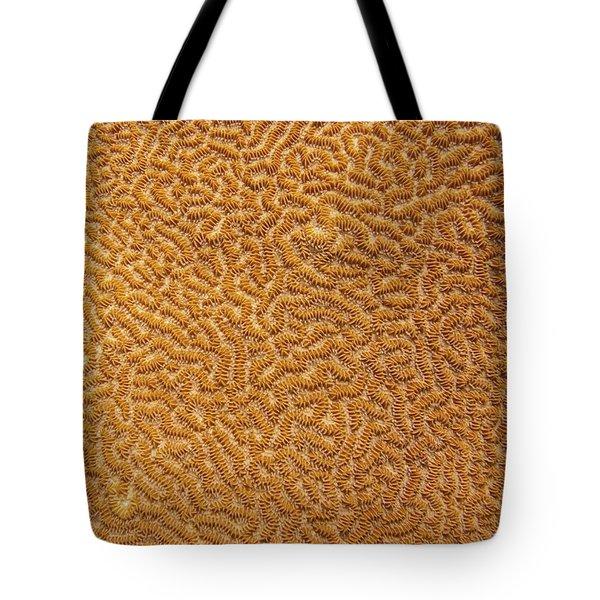Brain Coral 47 Tote Bag