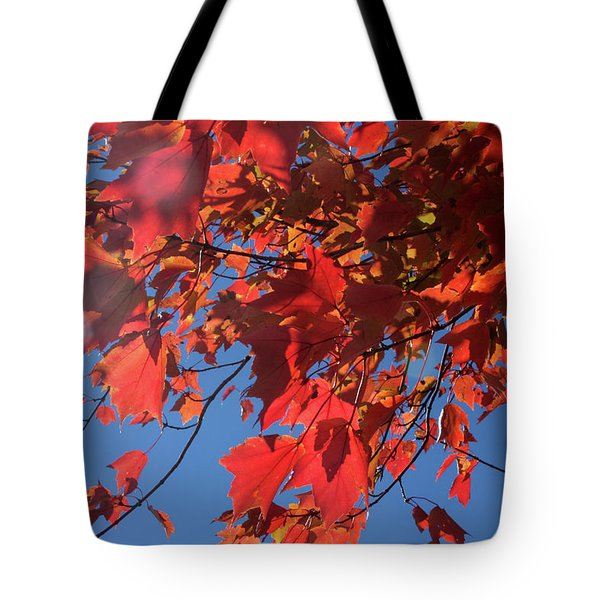 Branches Of Red Maple Leaves On Clear Sky Background Tote Bag
