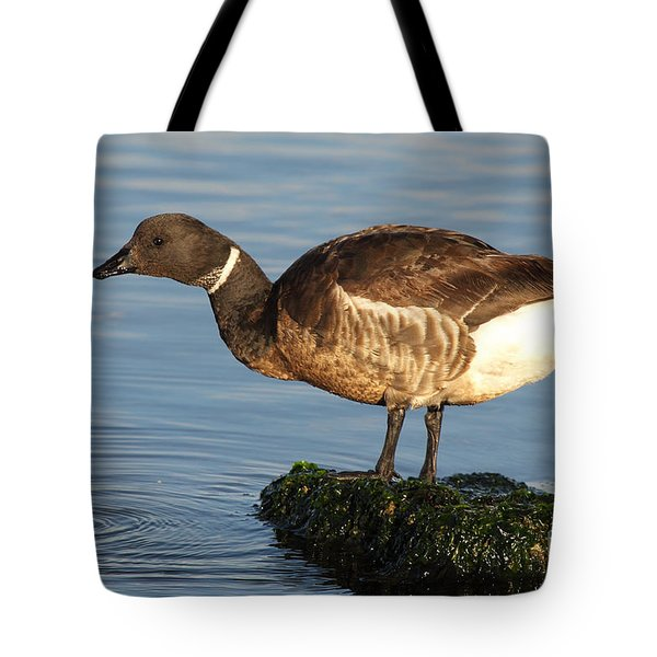 Tote Bag featuring the photograph Brant Leaning Over Water by Max Allen