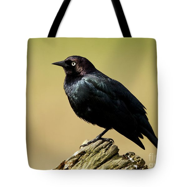 Brewers Blackbird Resting On Log Tote Bag