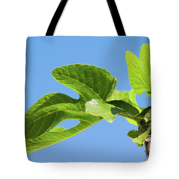 Bright Green Fig Leaf Against The Sky Tote Bag by Cesar Padilla