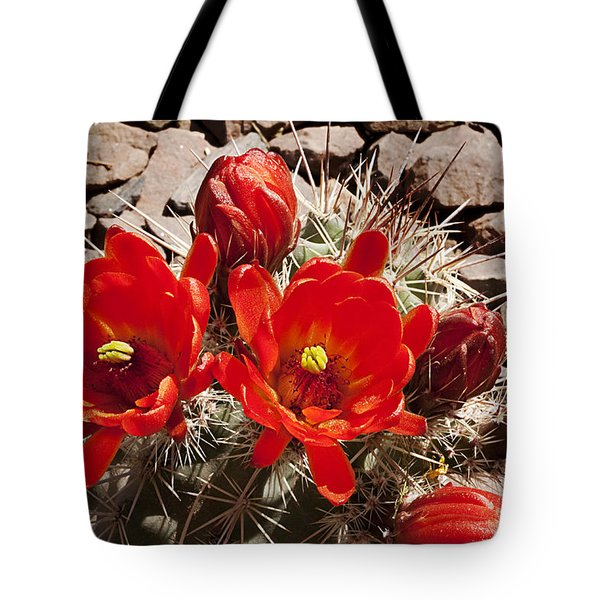 Tote Bag featuring the photograph Bright Orange Cactus Blossoms by Phyllis Denton