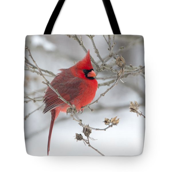 Bright Splash Of Red On A Snowy Day Tote Bag by Skip Tribby