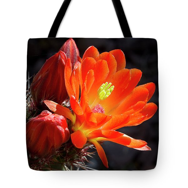Bright Tangerine Cactus Flower Tote Bag by Phyllis Denton