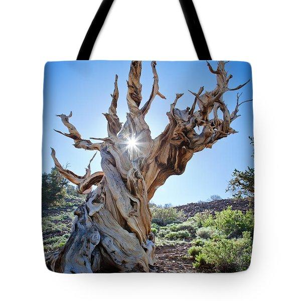 Bristlecone And Sun Tote Bag