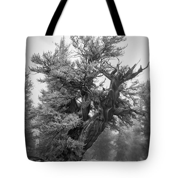 Bristlecone Beauty Tote Bag