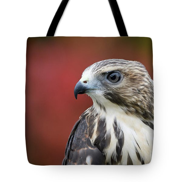 Broad Wing Hawk Tote Bag