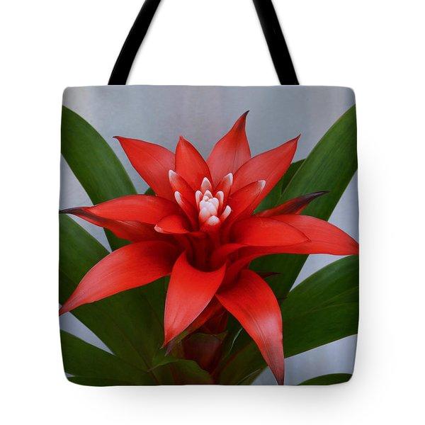 Bromeliad Tote Bag by Terence Davis