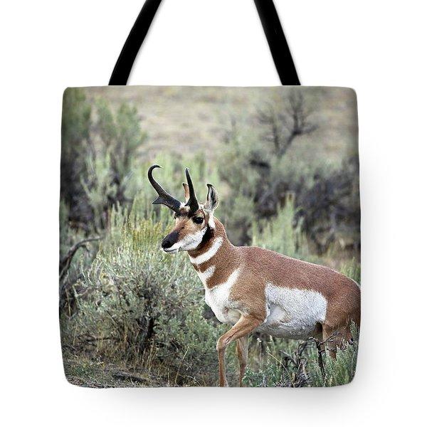 Pronghorn Buck Tote Bag