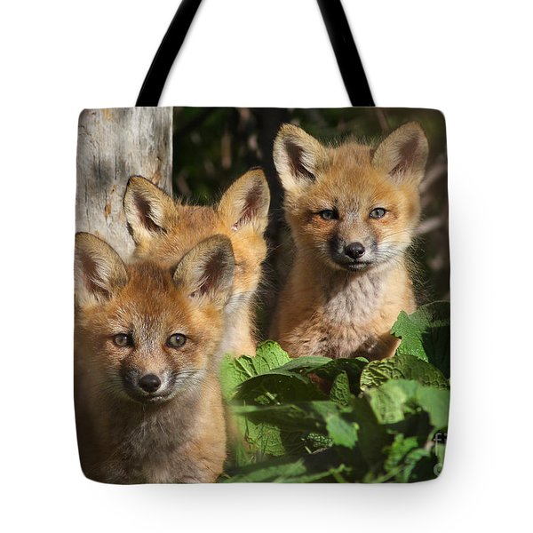 Brothers Tote Bag by Mircea Costina Photography