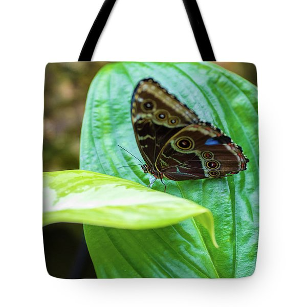 Brown And Blue Butterfly Tote Bag