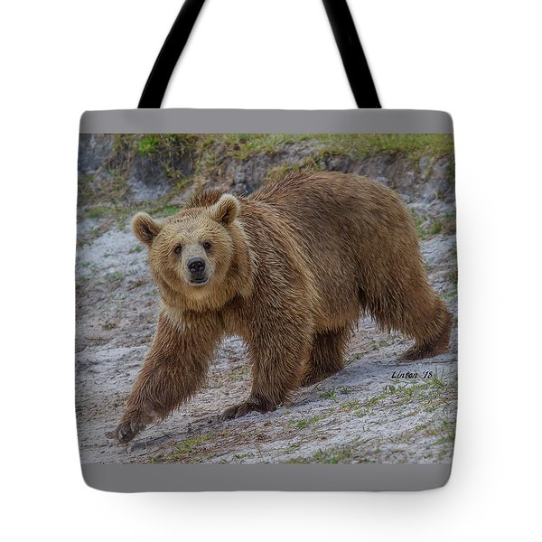Brown Bear 3 Tote Bag