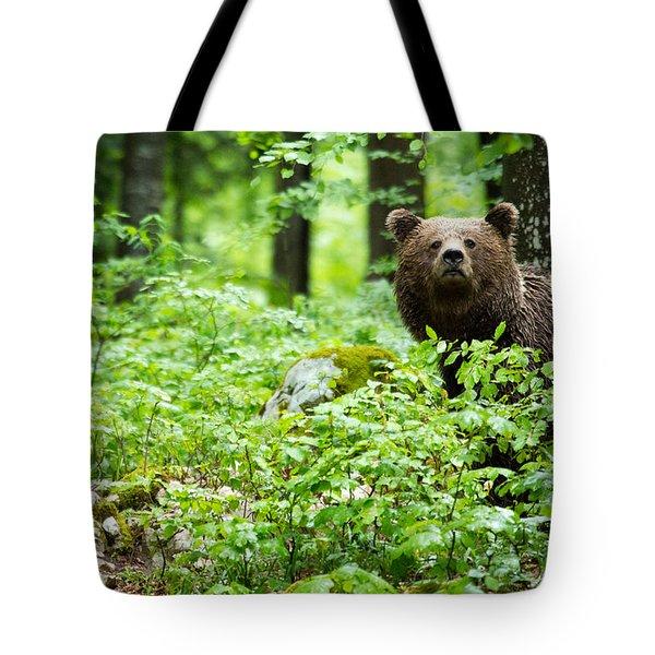 Brown Bear In Slovenia Tote Bag