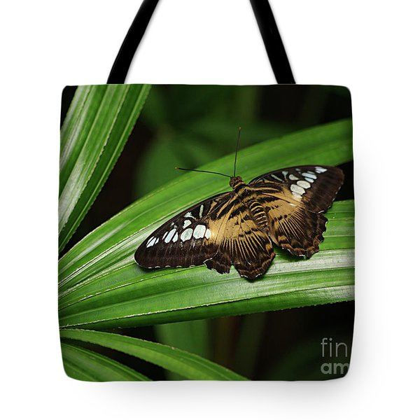 Brown Clipper Butterfly -parthenos Sylvia- On Frond Tote Bag