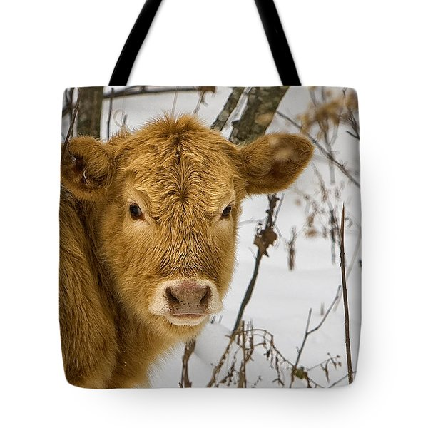 Tote Bag featuring the photograph Brown Cow by Ken Barrett